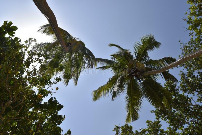 塞舌尔群岛Mahé棕榈树 免版税图库摄影