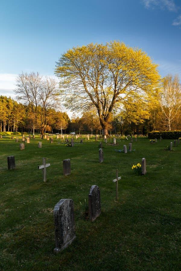 墓石和树在坟园 库存照片
