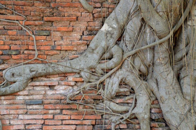 墙壁和树 库存照片