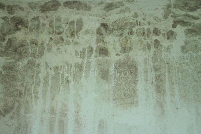 墙壁和真菌 库存照片