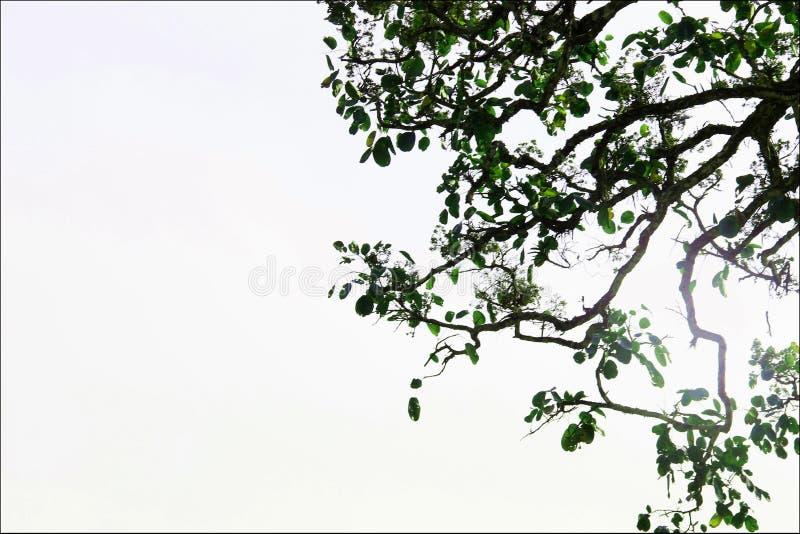 墙纸的树枝射击 免版税库存照片