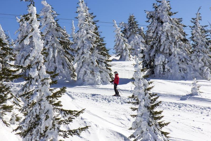 增强人滑雪 免版税库存照片