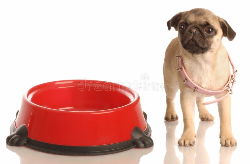 增长小狗 免版税库存图片