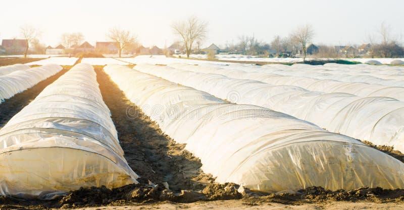增长的有机蔬菜自在塑料胶膜下的小温室在领域 种田农业农田 r 免版税库存图片