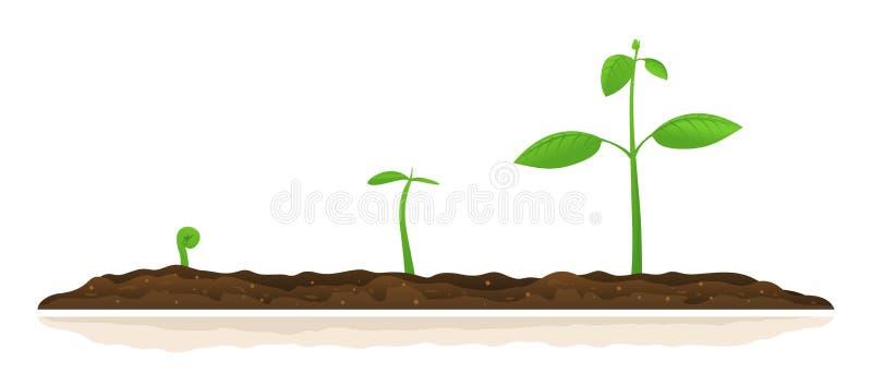 增长的植物进展例证 皇族释放例证