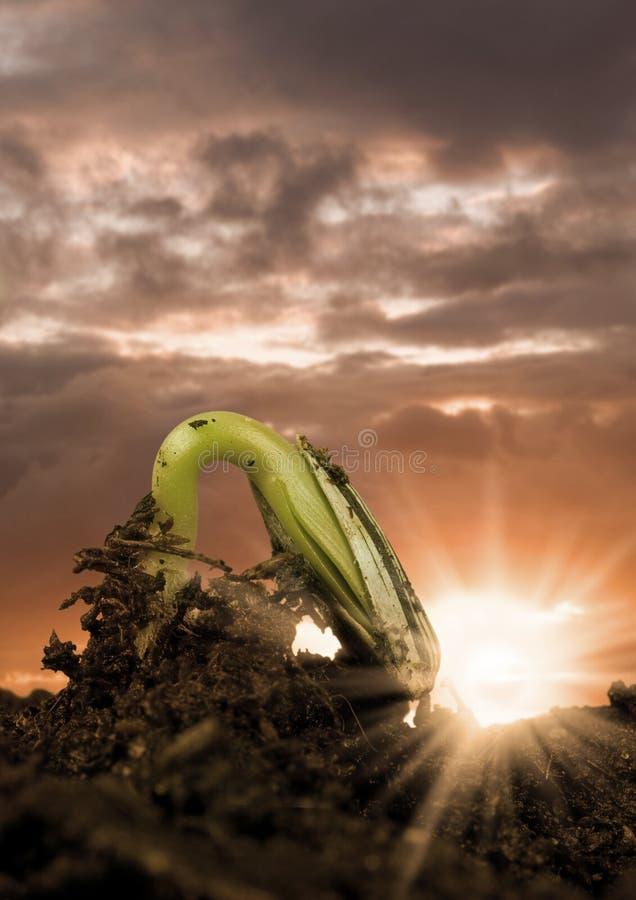 增长种子 库存图片