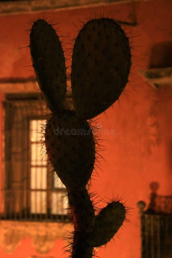 墨西哥仙人掌在与滑稽的可直立形状的晚上与老墙壁 库存图片
