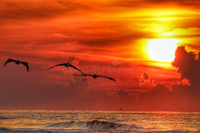 墨西哥湾海岸日出 免版税库存图片