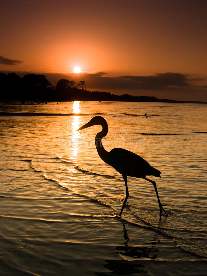 墨西哥湾海岸起重机或苍鹭在海滩 免版税库存照片