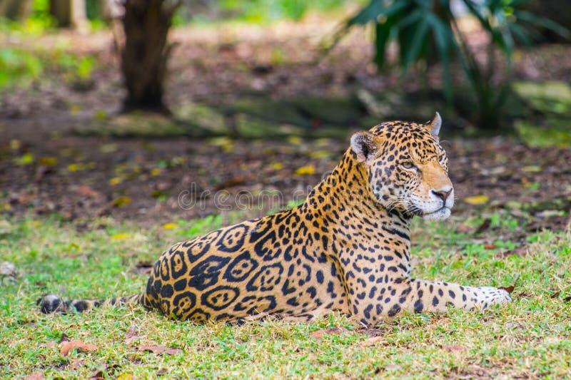 墨西哥的密林 图库摄影