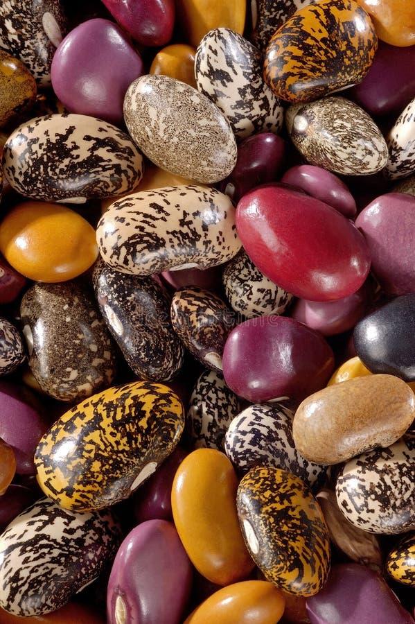 墨西哥的豆 免版税图库摄影