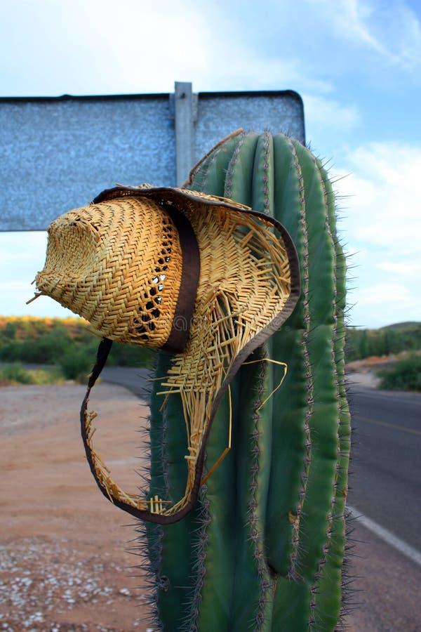 墨西哥仙人掌 免版税图库摄影