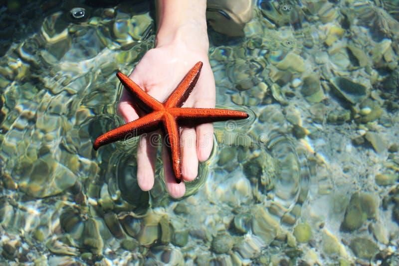 墨西哥 加利福尼亚湾 海星 库存照片