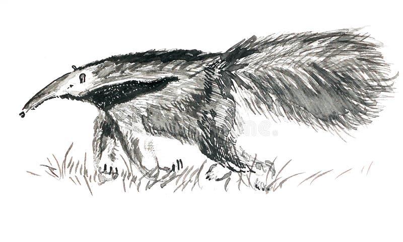 墨水被画的大食蚁兽 向量例证