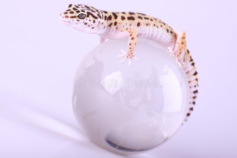 壁虎蜥蜴 免版税图库摄影