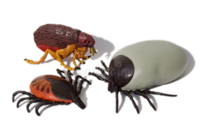 壁虱和蚤 免版税库存图片