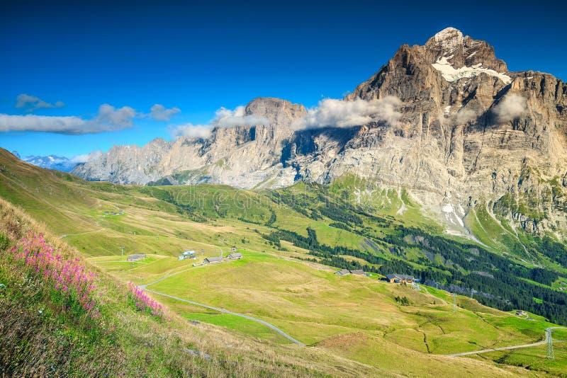 壮观的与山的夏天高山风景开花,瑞士,欧洲 免版税库存图片