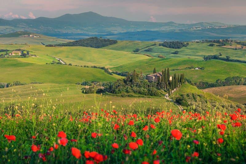 壮观的春天托斯卡纳风景、红色鸦片的美好的领域和在锡耶纳旅游市,皮恩扎附近的典型的石房子, 免版税图库摄影