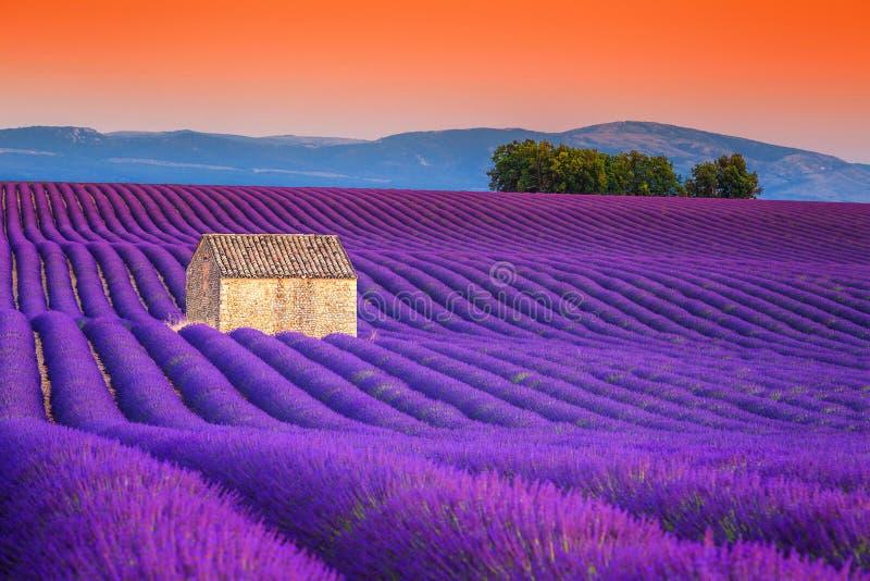 壮观的淡紫色在普罗旺斯, Valensole,法国,欧洲调遣 库存图片