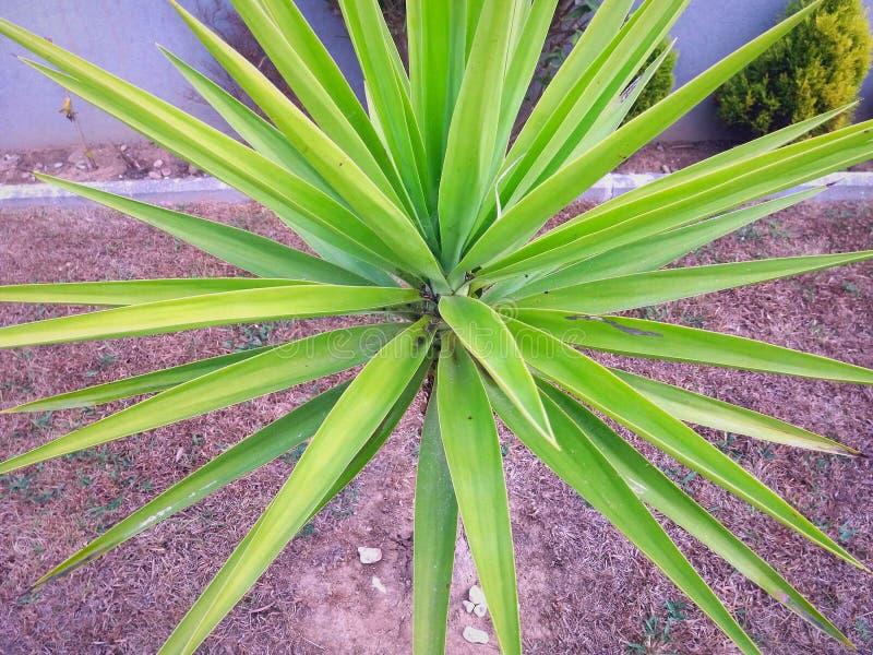 壮观的绿色植物 库存照片
