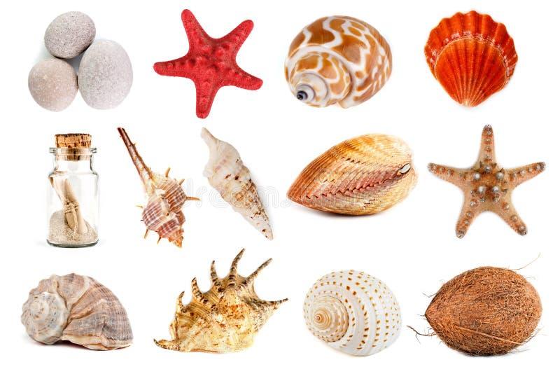 贝壳、海星、小卵石和椰子在白色背景 替换 免版税库存照片