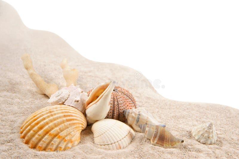 壳、珊瑚和干海顽童在沙子作为背景 免版税库存照片