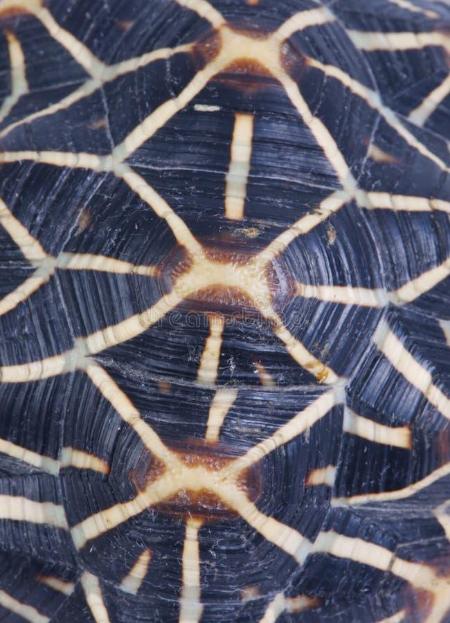 壳乌龟 库存照片
