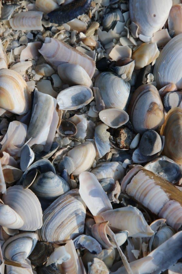 壳和剃须刀在海滩沿北海的岸卡特韦克的,荷兰 免版税库存照片