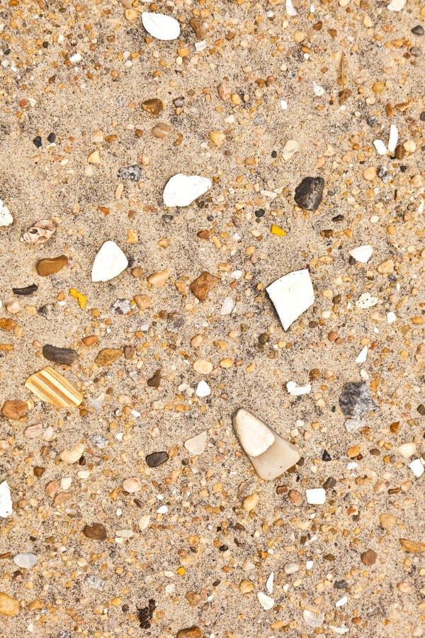 壳和石头在海滩 免版税图库摄影