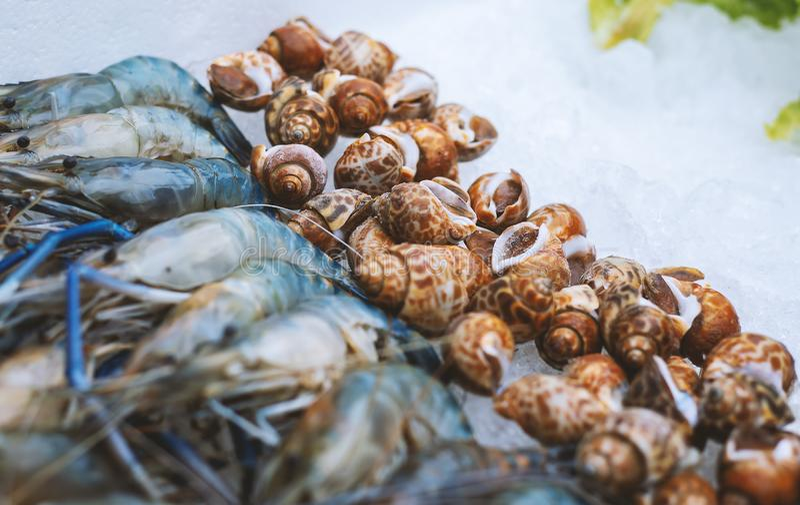 壳和虾 免版税图库摄影