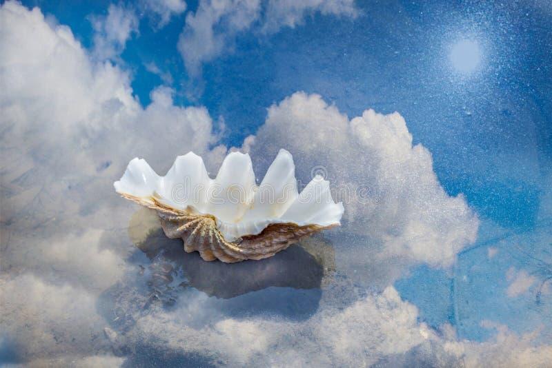 壳在与天空的反射的水中 概念夏天和海滩概念的美好的背景 E 库存照片