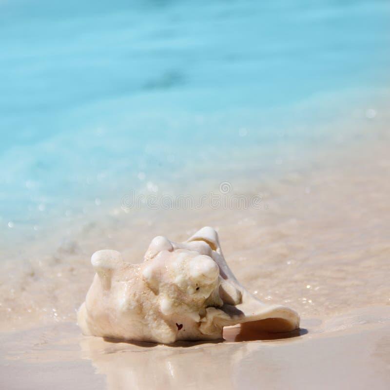 壳在加勒比海说谎 壳在白色沙子说谎反对绿松石水 方形的照片 标签的地方 库存照片