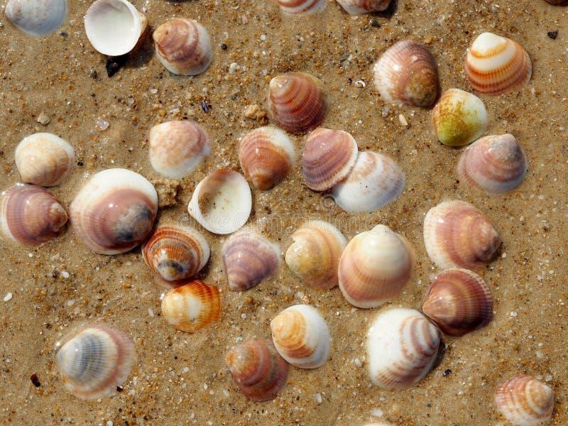 壳在水中 库存照片