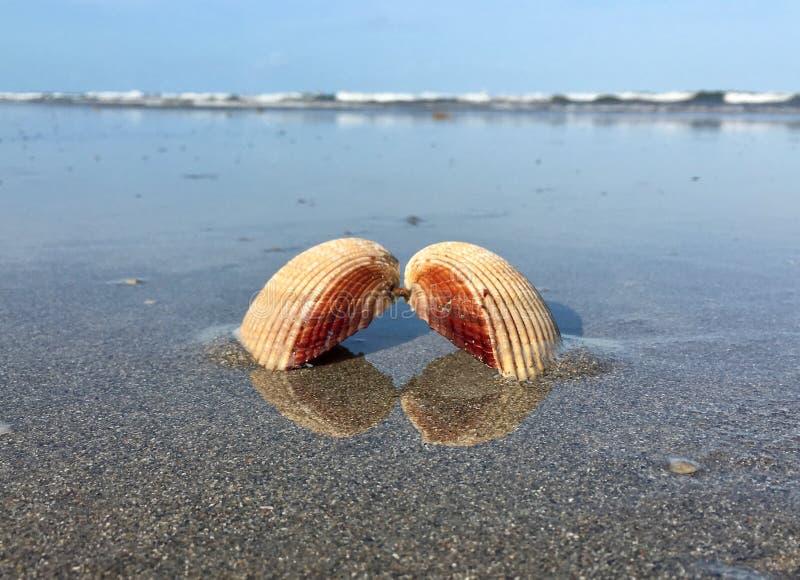 壳在水中 免版税图库摄影