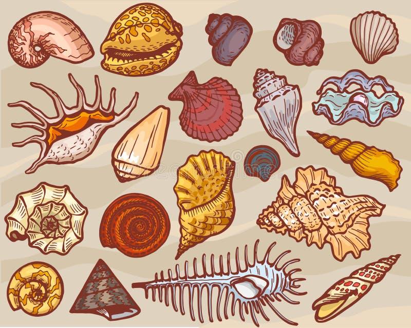 壳导航海洋贝壳和海洋海扇壳水下或海里的例证套贝类和蛤壳状机件 向量例证