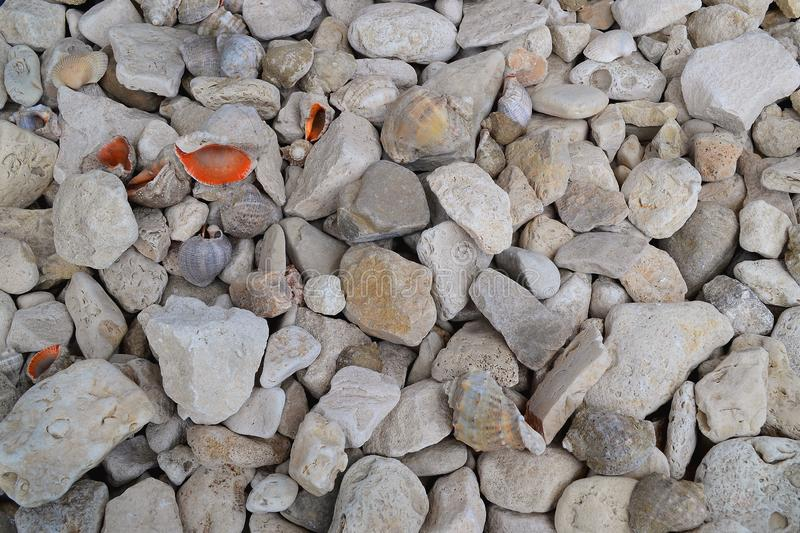 壳岩石海滚动的灰色和米黄片断和倒空rapan壳,背景纹理 库存照片