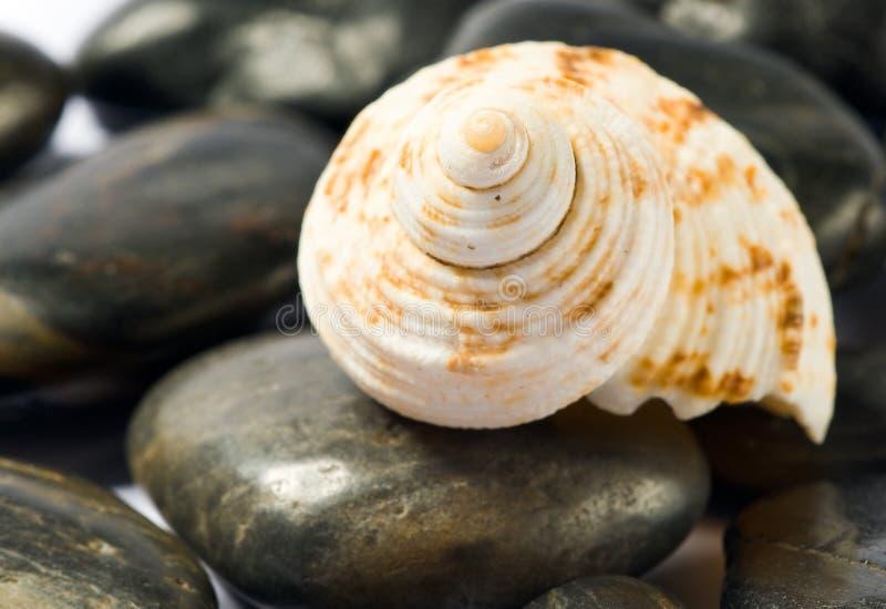 壳石头 免版税库存图片