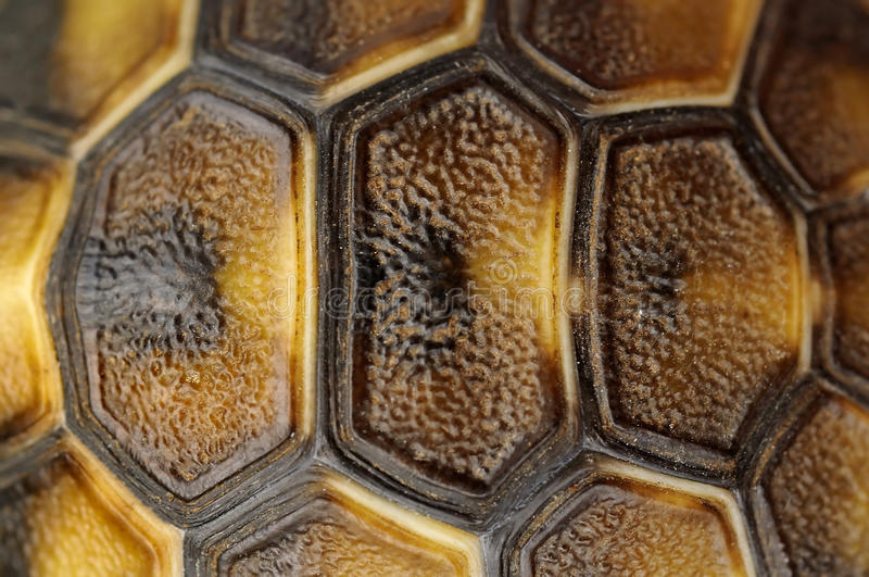 壳草龟 库存图片
