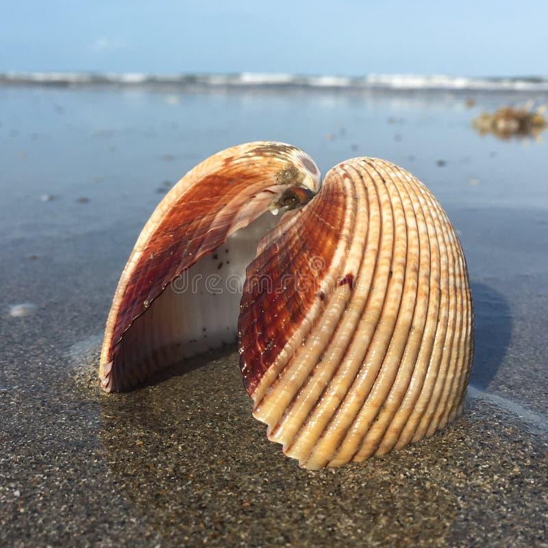 壳连接用彼此,在海滩 图库摄影