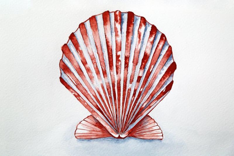 贝壳水彩 库存照片