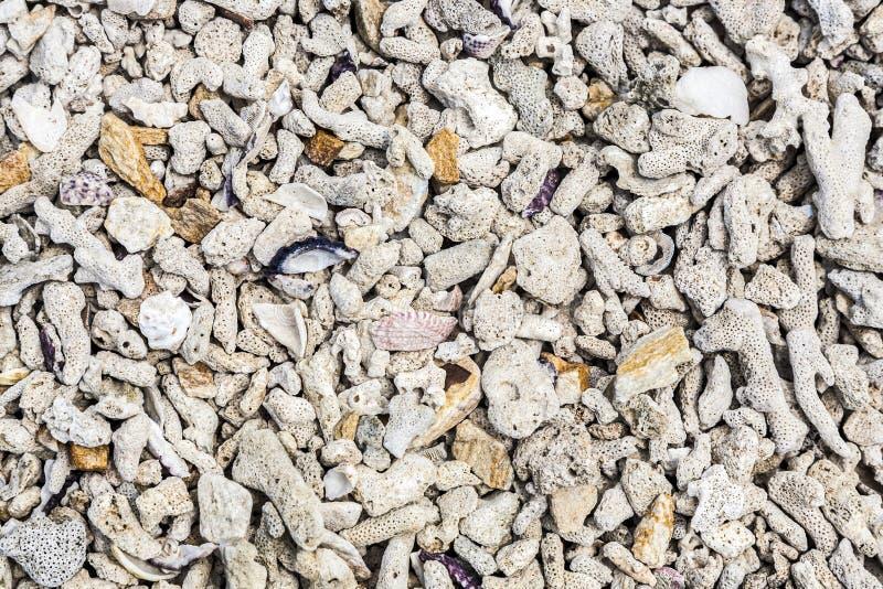 壳细节在海滩的 库存图片