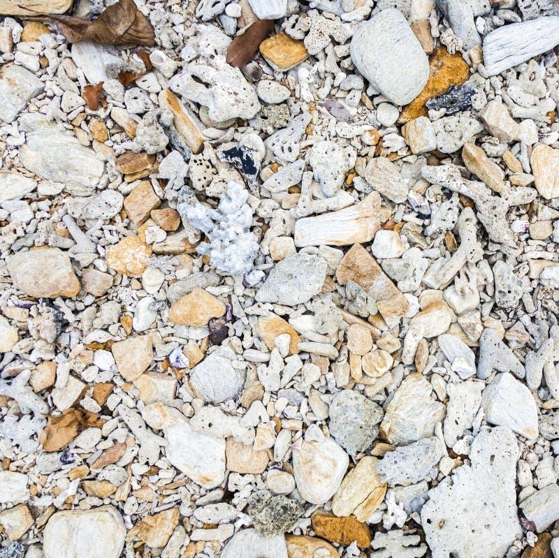 壳细节在海滩的 免版税库存照片
