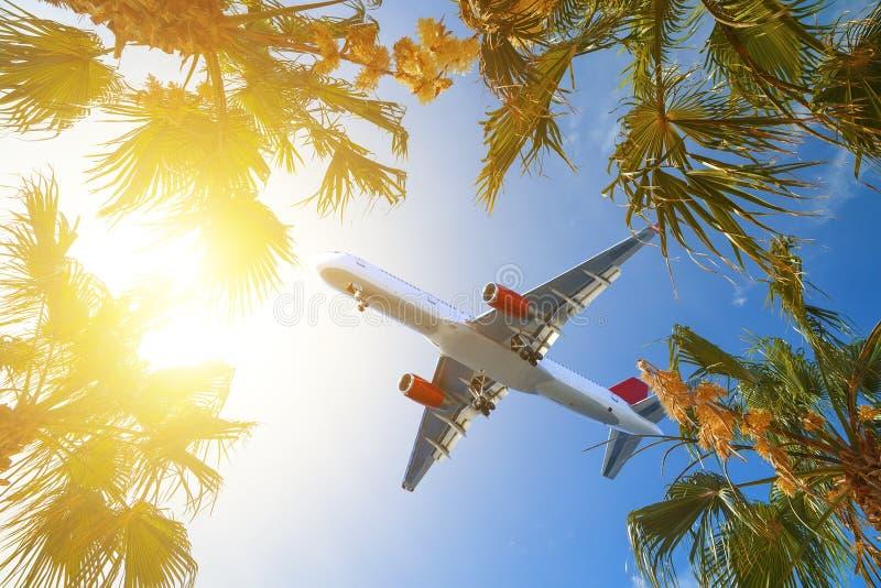处理在热带的航空器最终海岛 棕榈树加冠与在晴朗的天空背景的绿色叶子 椰树 免版税库存图片