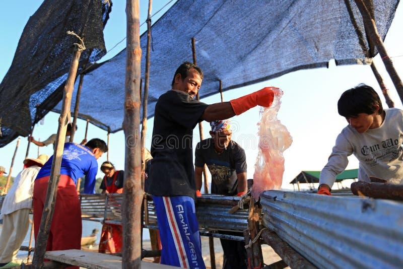 处理意志薄弱的人的渔夫从海运捉住 库存图片