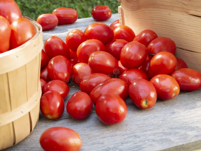 处理或装于罐中的有机罗马蕃茄收获 免版税库存图片