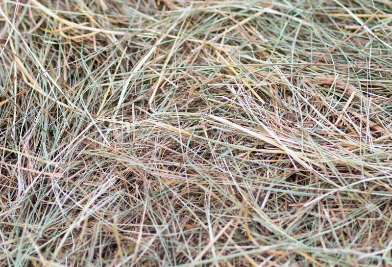备草粮自然草干燥绿灯米黄的背景 库存图片