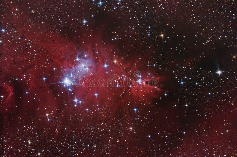 复杂星云 库存照片