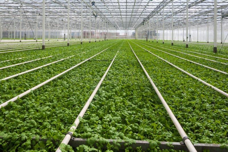 复杂荷兰语小温室现代的工厂 图库摄影