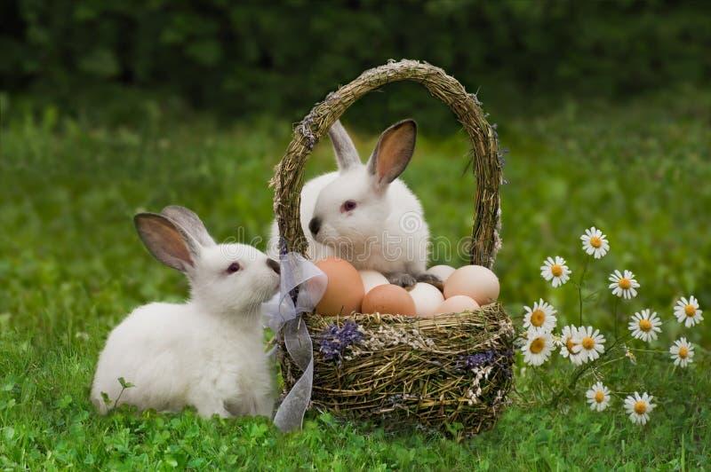 复活节。 与鸡蛋篮子的野兔  免版税库存照片
