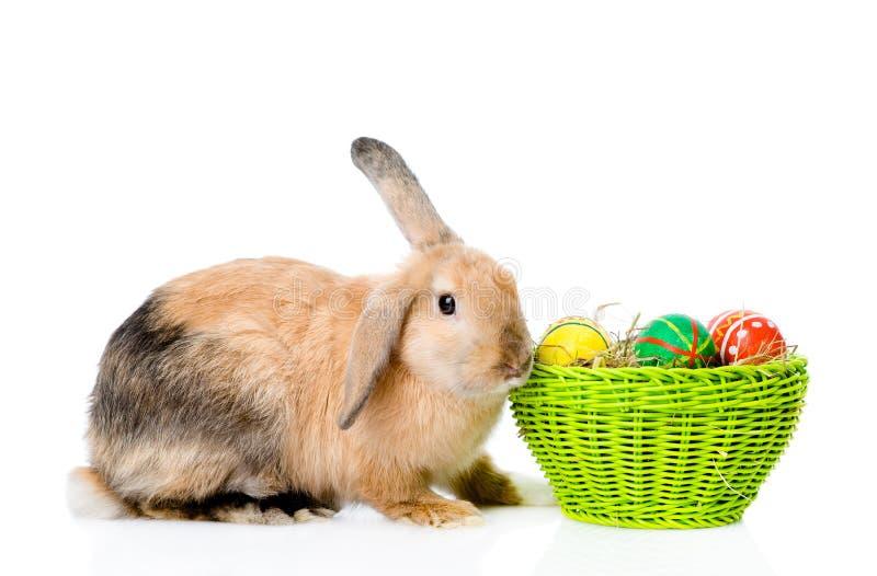 复活节兔子用篮子鸡蛋 背景查出的白色 图库摄影
